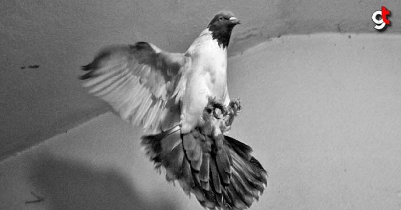 Bu Güvercin 195 Kişinin Hayatını Kurtardı