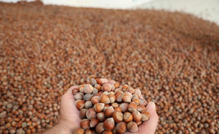 Türkiye'den 7 ayda 189 bin ton fındık ihraç edildi