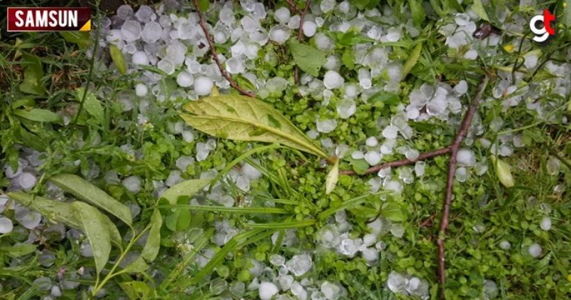 Çarşamba'da dolu yağışı ekinlere zarar verdi