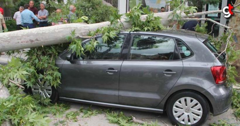 Şiddetli rüzgar ağaçları yıktı
