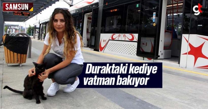 Samsun'da tramvay durağındaki kediye kadın vatman bakıyor