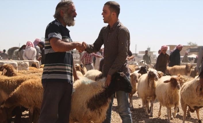 Fırat Kalkanı ve Zeytin Dalı bölgelerinde Kurban Bayramı hazırlıkları