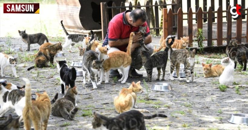 Dünyada sayılı ülkede, Türkiye'de ise ilk ve tek kedi kasabası Samsun'da