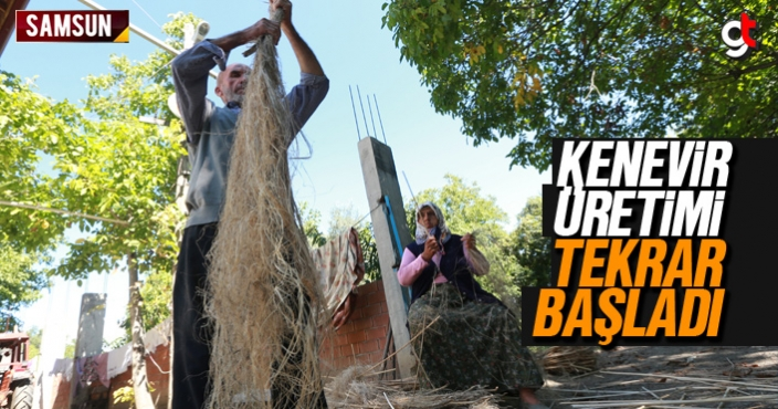 Kenevir üretimi Samsun'da tekrar başladı