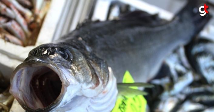 Batı Karadeniz'deki levrek kıtlığında 3 balık, 1600 liraya alıcı buldu