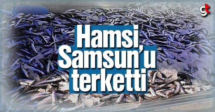 Hamsi Samsun'u terketti