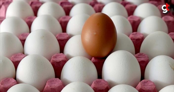 Yumurta ve su ürünlerindeki KDV indirimi üreticileri sevindirdi