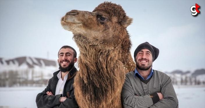 Çoban kardeşler kar üstünde şampiyon develer yetiştiriyor