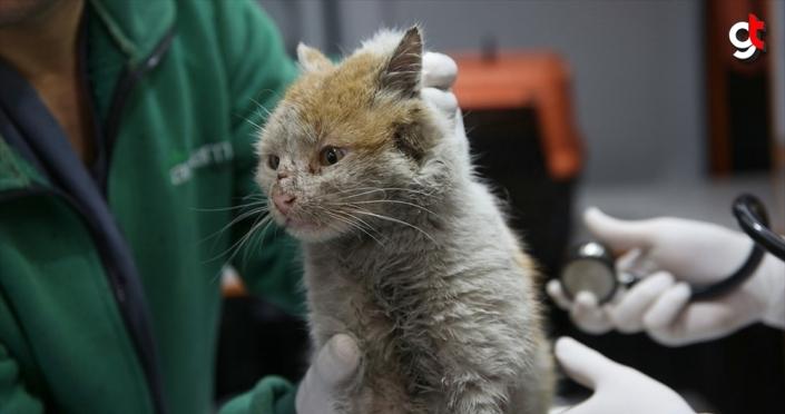 Enkaz altından çıkarılan kedi 'Toros'a belediyede bakılıyor