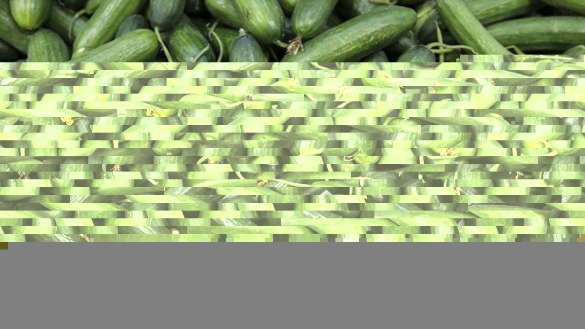 Ocakta en fazla salatalık fiyatı arttı
