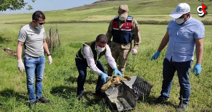 Diyarbakır'da jandarma nesli tükenmekte olan Fırat Kaplumbağası buldu