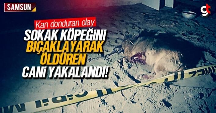 Köpeği bıçaklayarak öldüren zanlı yakalandı