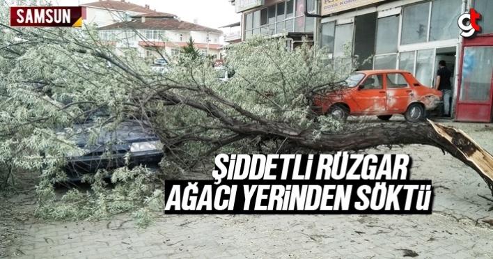 Samsun'da şiddetli rüzgar ağaçları yerinden söktü