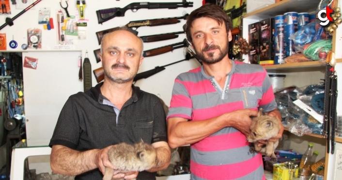 Amasya'da yol kenarında bulunan iki kurt yavrusu koruma altına alındı