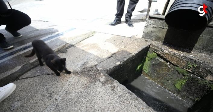 Anne kedi, yavrusunu kurtarmaya çalışan itfaiye ekibinin yanından ayrılmadı