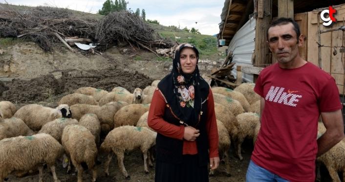 Devlet desteğiyle aldıkları sayıda koyunu, sürülerini genişletince bağışladılar