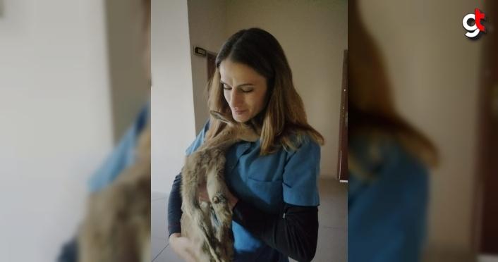 Gümüşhane'de ayağı kırık yaban keçisi yavrusu tedavi altına alındı