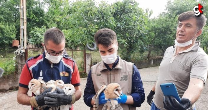 Havalandırma boşluğuna düşen yavru başkuşları itfaiye ekipleri kurtardı