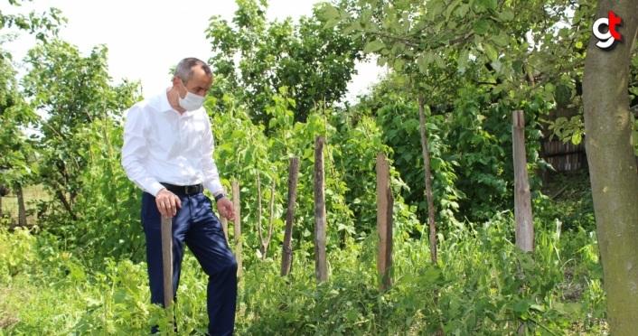 Karabük'te sağanak ve dolu tarım arazilerine zarar verdi