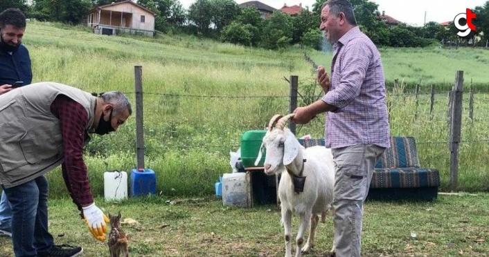 Karaca yavrusu kendisini emziren keçiyi annesi olarak benimsedi