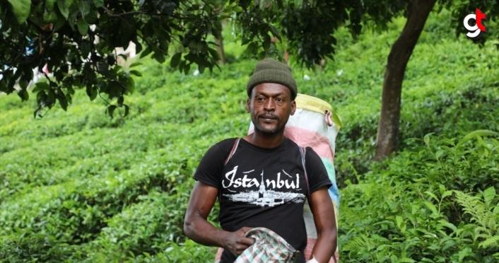 Rizeli üretici yaş çay hasadını Senegalli arkadaşlarıyla gerçekleştiriyor