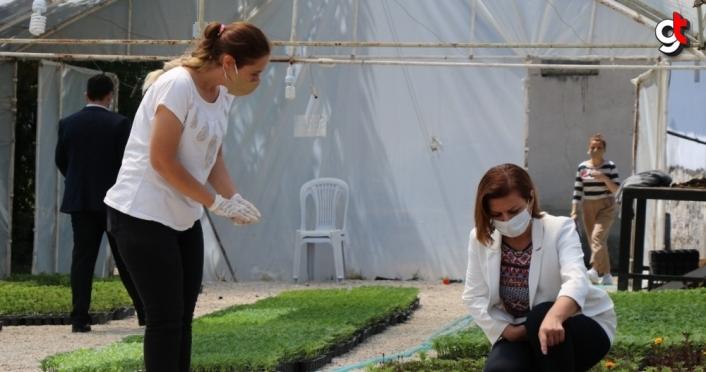 Safranbolu Belediyesinden tarımsal üretim