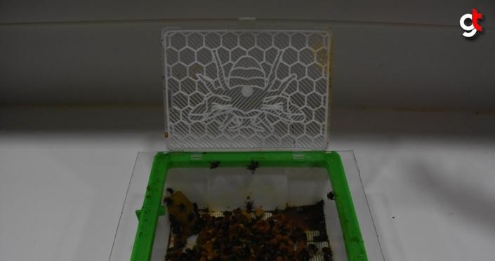 Seraların çalışkan işçileri bombus arılarının Ordu popülasyonu araştırılıyor