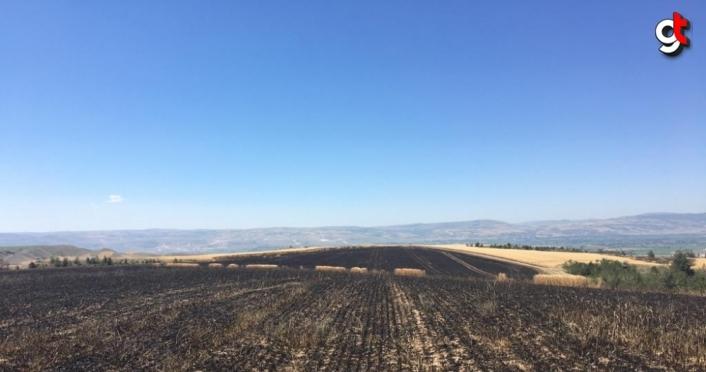 Suluova'da buğday tarlasını kundakladığı iddia edilen şüpheli gözaltına alındı