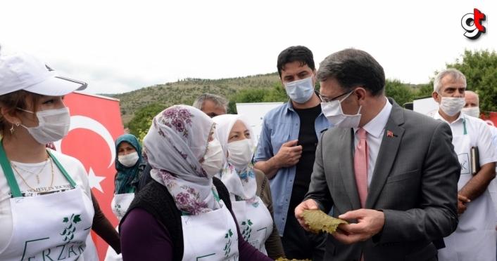 Tokat'ta Vali, Belediye Başkanı ve Rektör tarladan asma yaprağı topladı