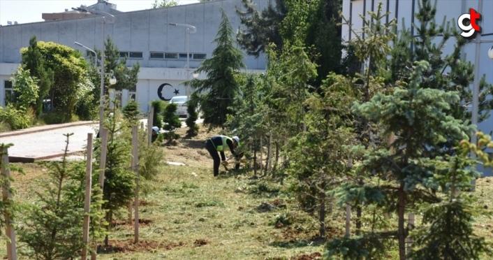 Trabzon Üniversitesi kampüsündeki 12 bin fidanın bakımı yapıldı