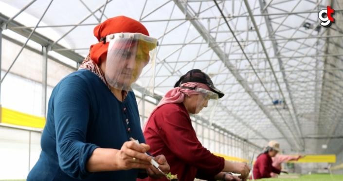 Zonguldak'ta ürettiği fideleri ülkenin dört bir yanına gönderiyor