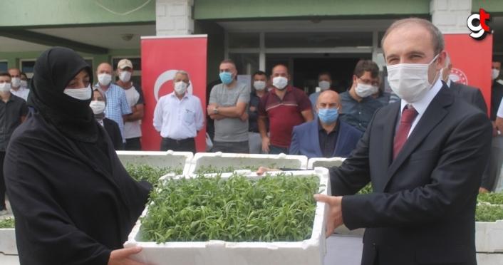 Bayburt'ta kadın çiftçilere 150 bin tarhun fidesi dağıtıldı