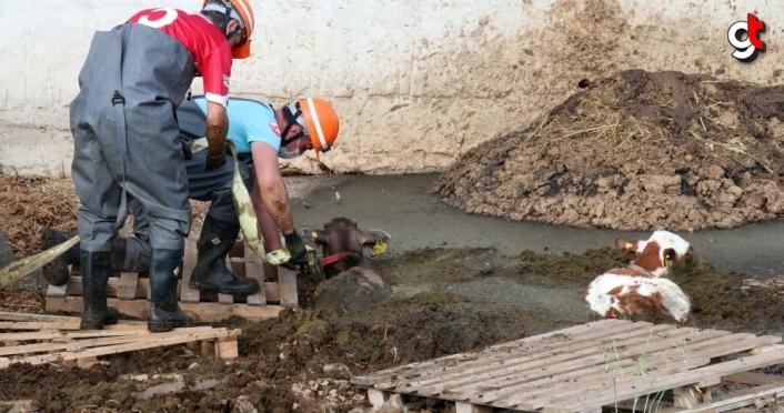 Bolu'da gübre yığınına saplanan buzağıları itfaiye kurtardı