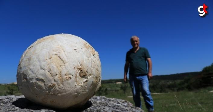 Futbol topu sandı, 5 kilogram ağırlığında mantar çıktı