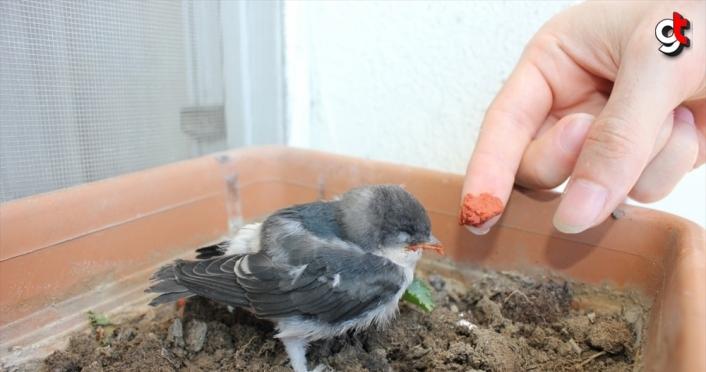 Hayvansever öğrenci köpeğin ağzından kurtardığı kuşu besleyip doğaya saldı