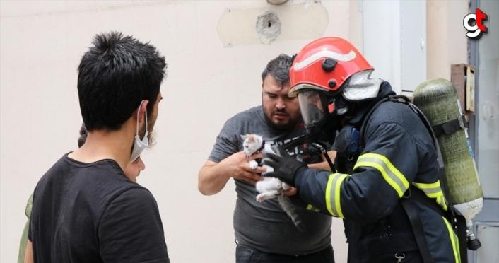 Kedi yavrularını yangından itfaiye ekipleri kurtardı