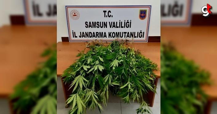 Samsun'da uyuşturucu operasyonlarında 12 şüpheli yakalandı