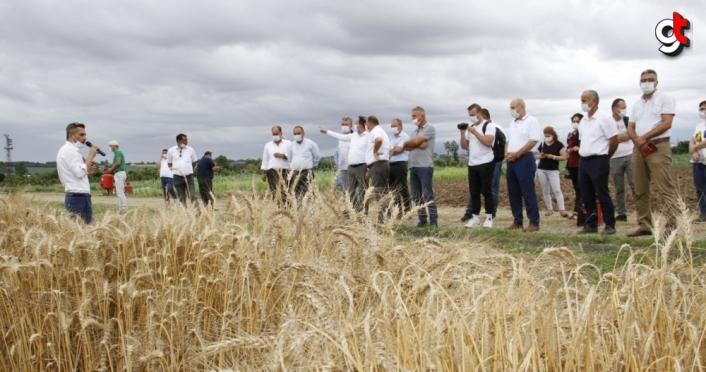 Tescillenen yerli ve milli ekmeklik buğday tohumu