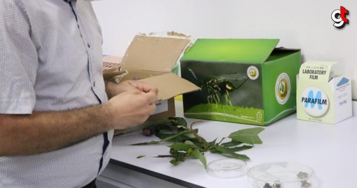 Zonguldak'ta gal arısıyla