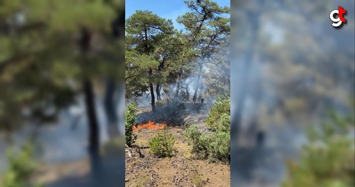 Amasya'da çıkan orman yangınına müdahale ediliyor