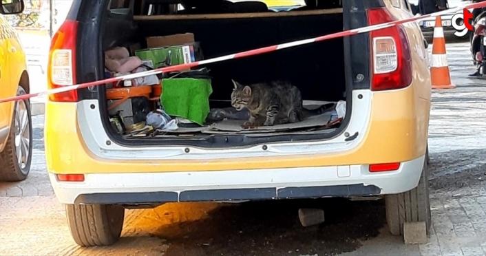 Annesi ölen kedi taksi durağının maskotu oldu