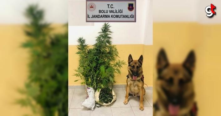 Bolu'da uyuşturucu operasyonunda bir şüpheli gözaltına alındı