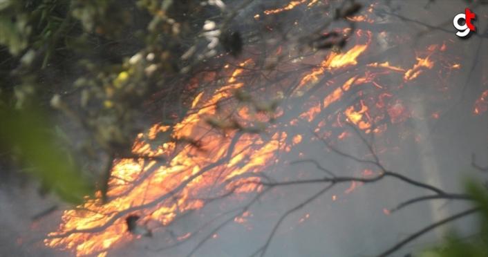 Düzce'de 15 dönüm fındık bahçesi ile 10 dönüm ormanlık alan yandı