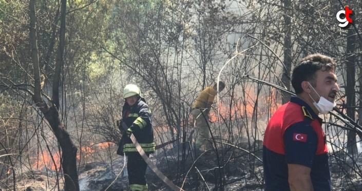 Düzce'de orman yangını çıktı