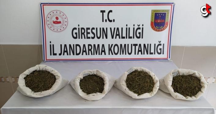 Giresun'da uyuşturcu operasyonunda 4 kişi gözaltına alındı