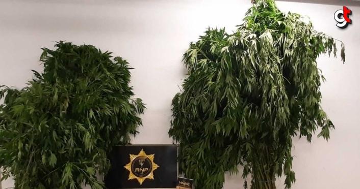Rize'de uyuşturucu operasyonunda 4 kişi tutuklandı