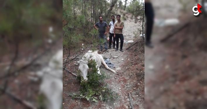 Karabük'te dereye düşen yaralı inek iş makinesiyle kurtarıldı