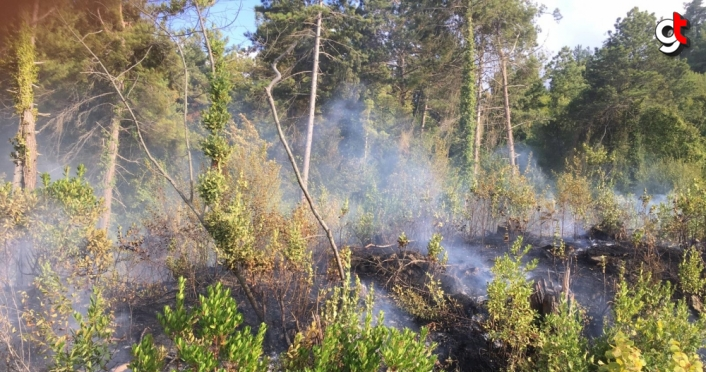 Kastamonu'da ormanlık alanda çıkan yangın büyümeden söndürüldü