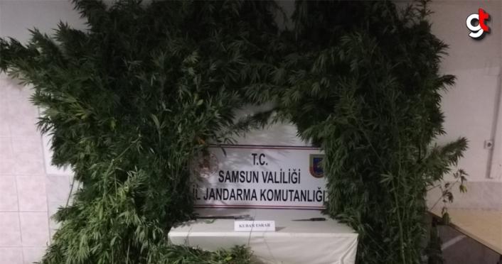 Samsun'da jandarmanın uyuşturucu operasyonunda 15 şüpheli yakalandı