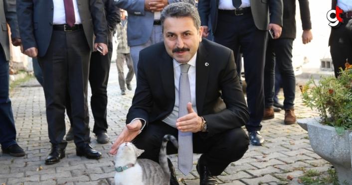 Tokat Belediyesi sokak hayvanlarını unutmadı